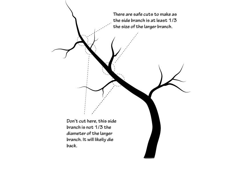 Crabapple Pruning In Four Easy Steps Overgrown No More Part 3