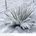 Architectural plants for winter gardens