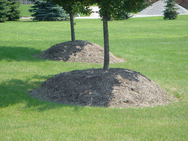 Planting tree mistake - Improper mulching