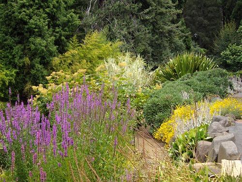 mixed garden photo