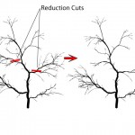Pruning-Reuction-cuts