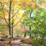 Japanese garden fall color lessons you can use