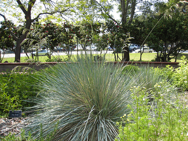 Deer resistant plants your garden sanctuary for Ornamental oat grass varieties