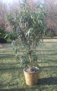 plastic bamboo plant.