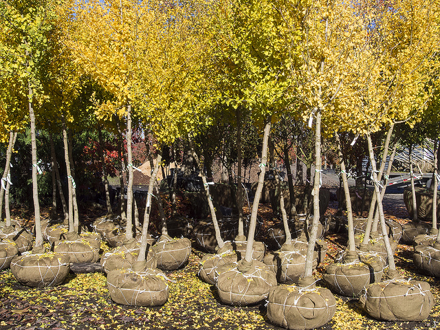 Bare Root Trees To Stretch Your Landscaping Budget