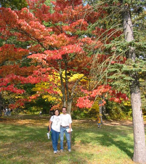Flowering dogwood (Cornus florida) in Fall color
