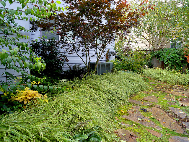 Japanese garden plant Japanese forest grass example