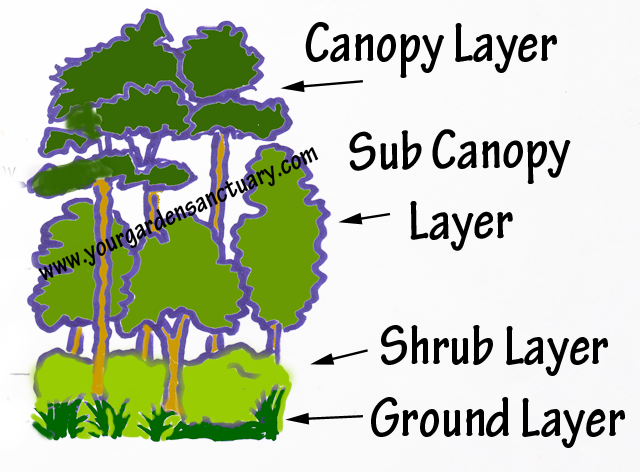 Woodland inspired garden layers  sc 1 st  Your Garden Sanctuary : canopy layer plants - memphite.com