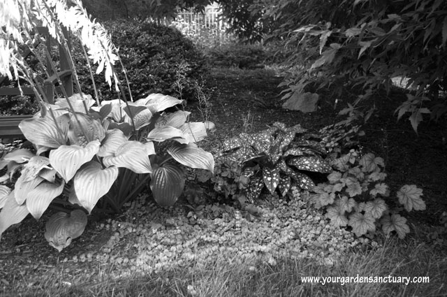Using plant textures in your garden mixed textures in B&W