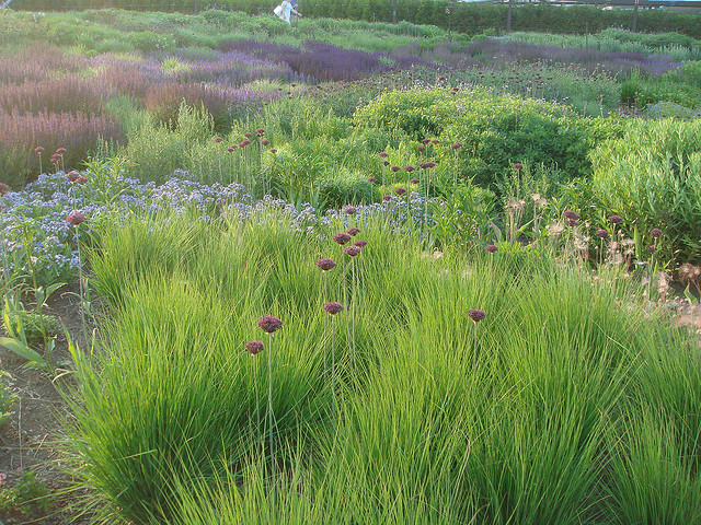 Using plant textures in your garden fine textured plants