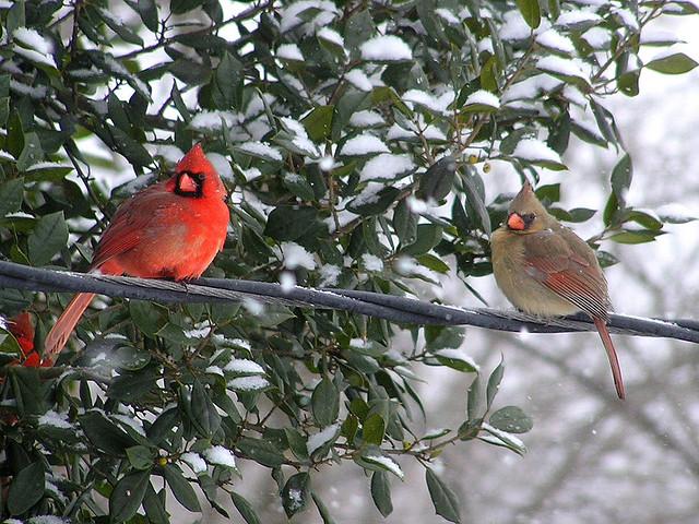 Backyard for bird watchers