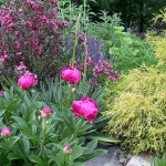 Landscapers favorite shrubs, some good, some not so good