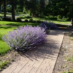 12 easy care perennials, landscapers favorites part 2