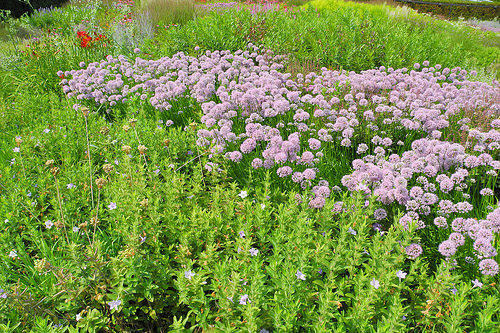 lurie garden photo shows some simple plant combo's.