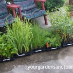 Planting Plugs is a Cheap and Easy Way to Plant a Landscape