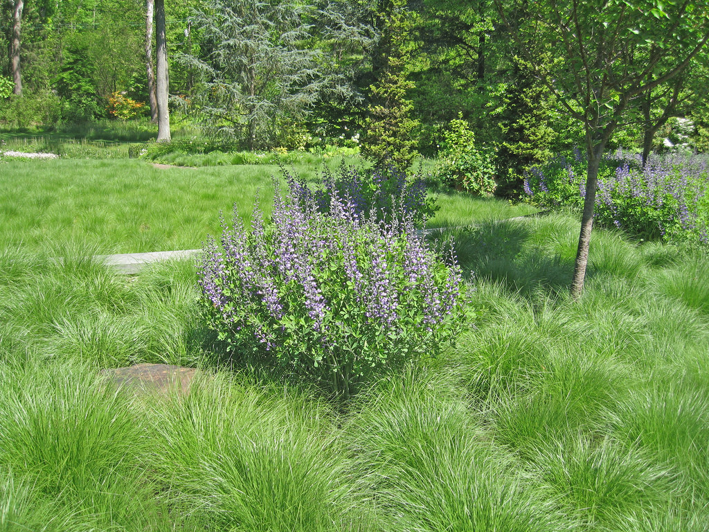 Native groundcovers can include grasses like prairie dropseed