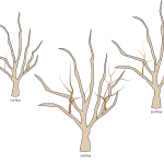 Crabapple Pruning in 4 Easy Steps: Overgrown Mess No More (Part 2 of 3)