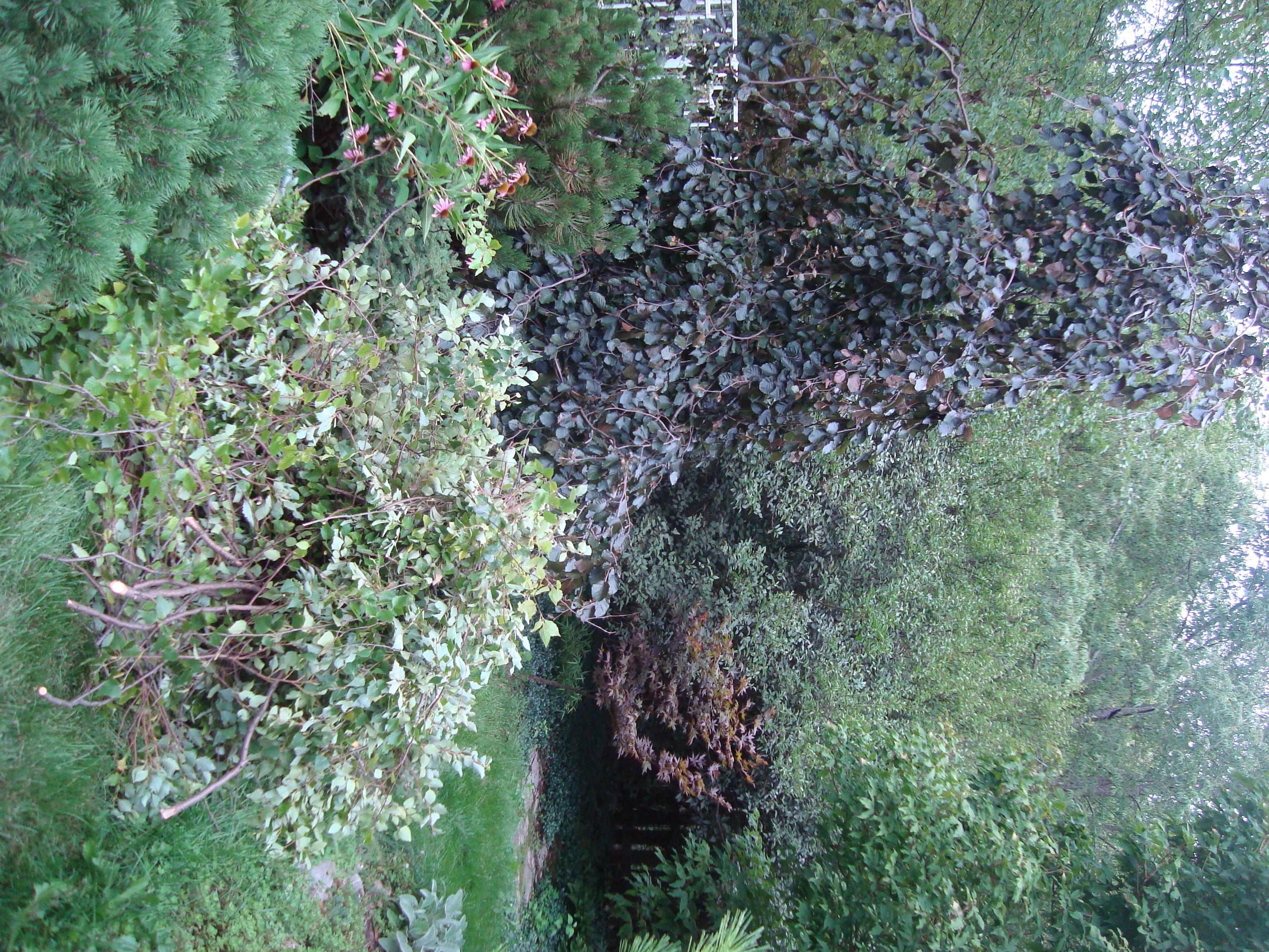 picture 010 your garden sanctuary