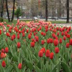 Plant spring bulbs? The time is quickly approaching