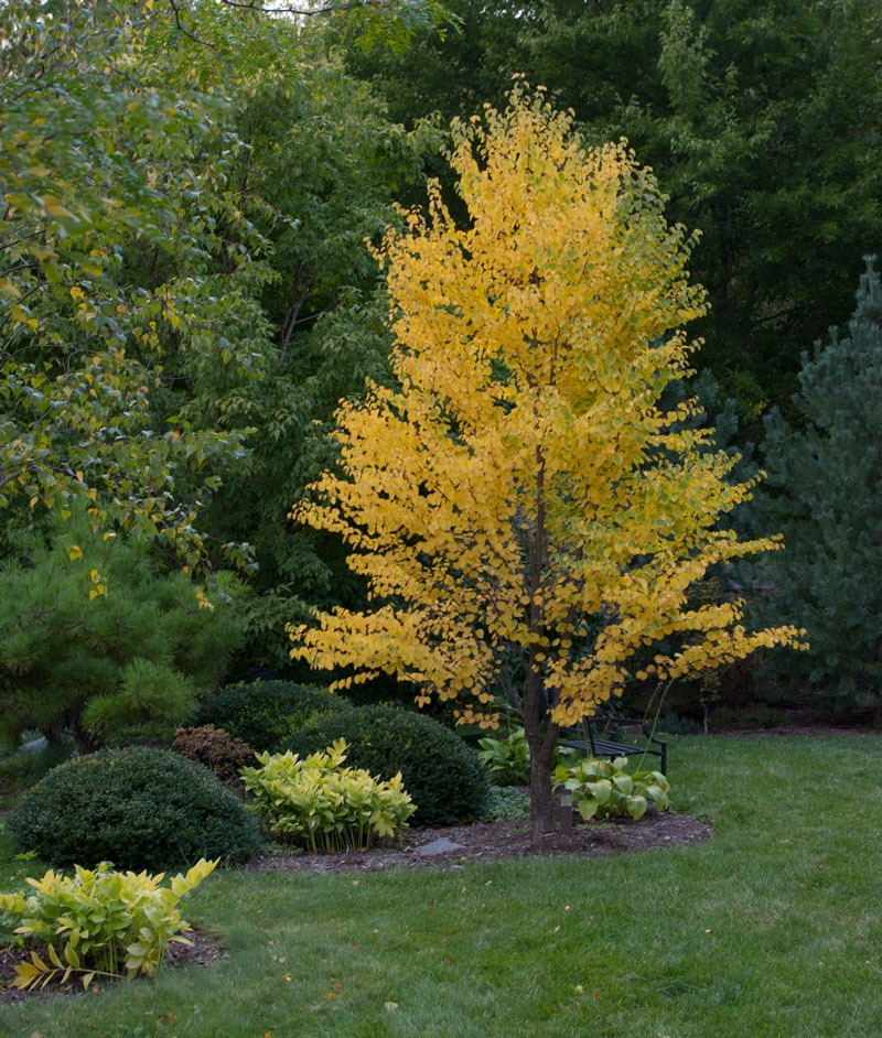 Contrasting forms and colors along with analogous colors make an early fall standout.