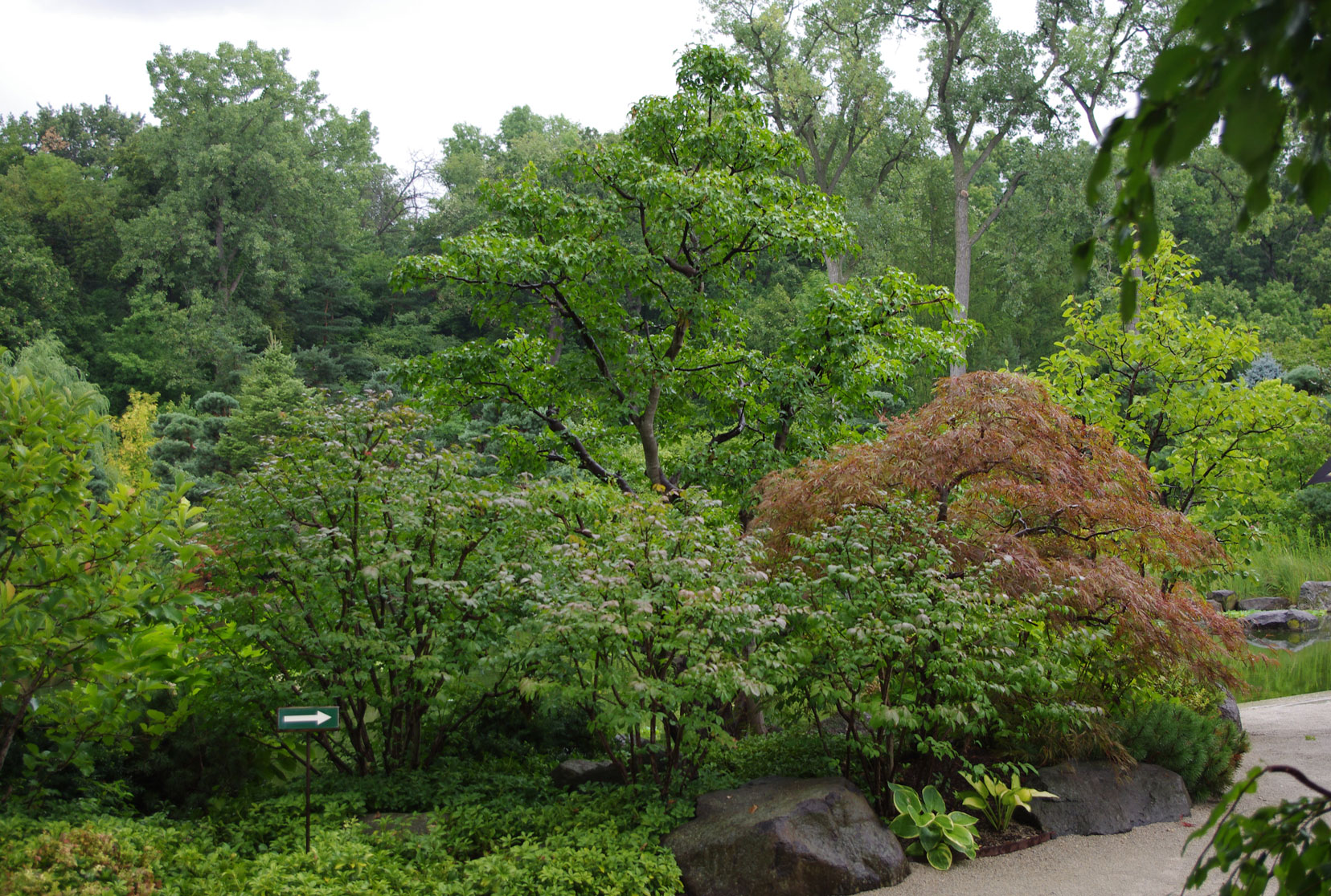 Pruning done at a Japanese garden