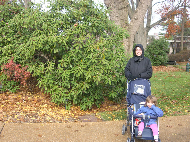 PLANTING RHODODENDRONS IN FOUR SEASON GARDENS - St Louis Rhododendron