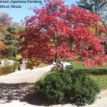 Plants for fall color – Part 1 of 2