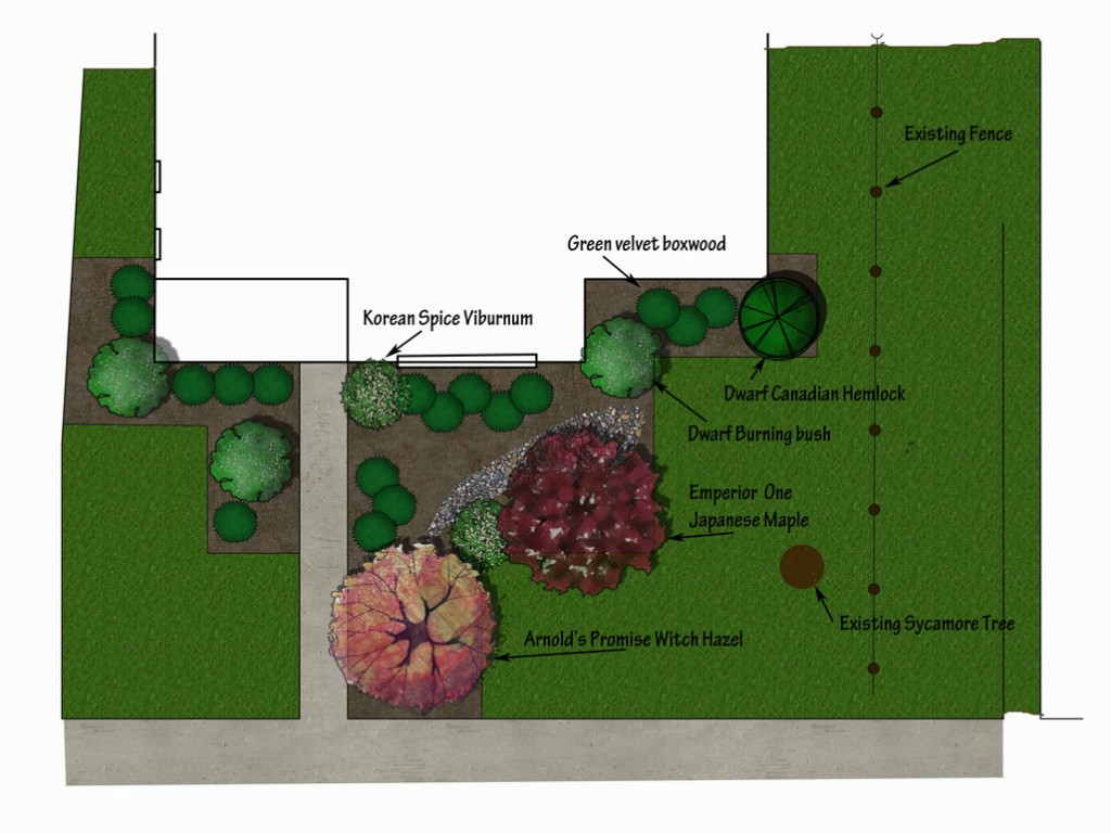 Front yard design for walnuts with boxwood added