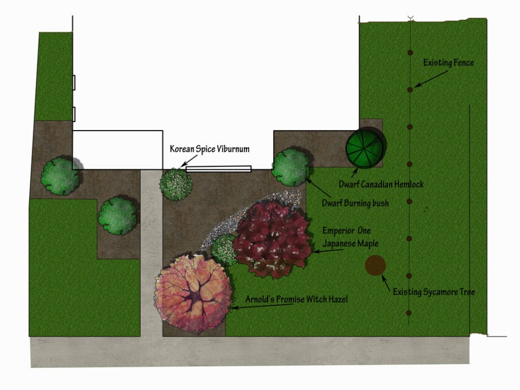Front yard design for walnuts with Hamamelis x intermedia 'Arnold's Promise'