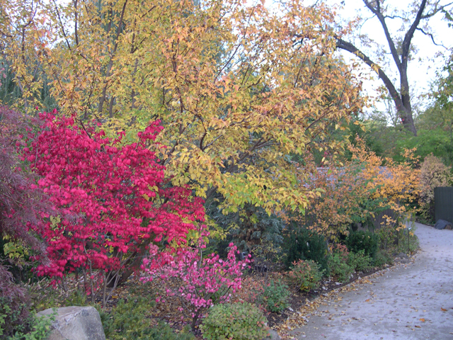 Mixed border in fall