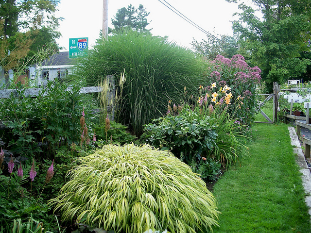 Mixed borders for enclosure for Ornamental grass bed design