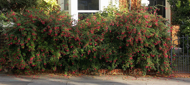 Enclose your garden with an Informal hedge