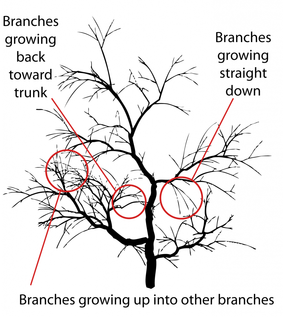 Types of branches to remove - three types
