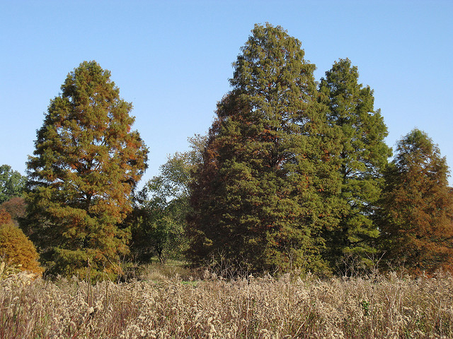 Trees for wet areas include the Bald Cypress