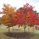 Creating a woodland garden #2