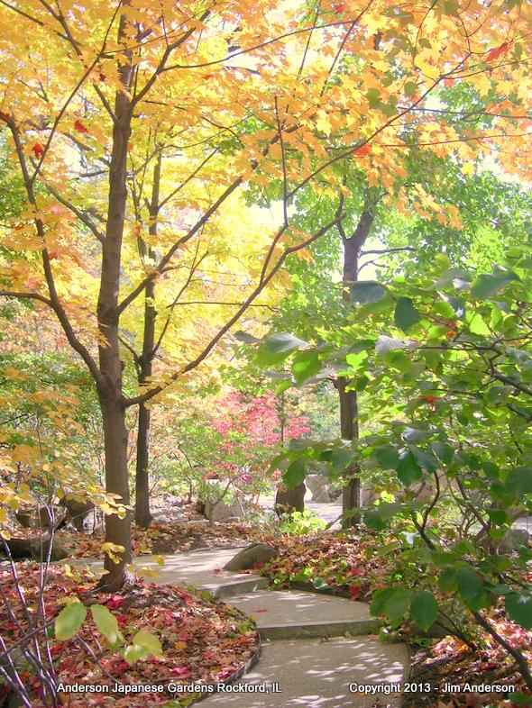 Autumn Light in a Japanese Garden