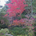 Japanese garden fall color can inspire your garden design