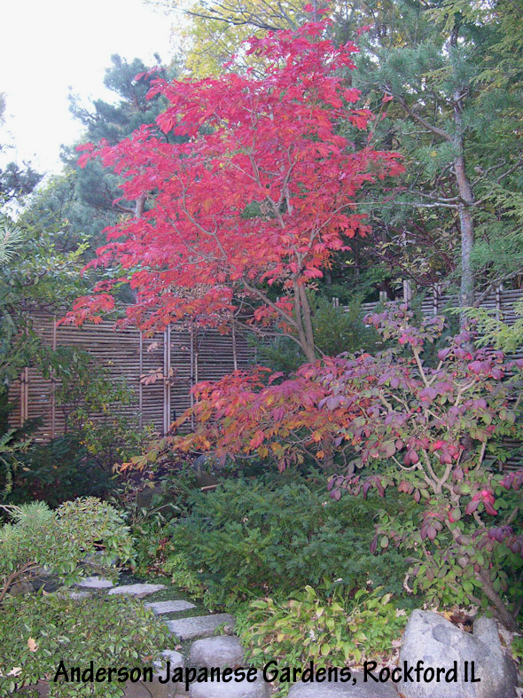 Japanese Garden Landscaping Archives Your Garden Sanctuary