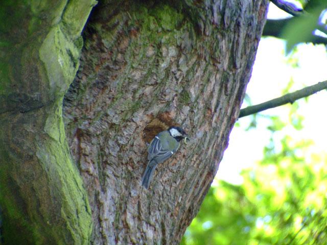 Bird feeding caterpillar to