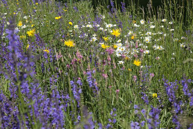 Prairie style perennial planting