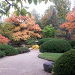 Plants for Fall Color – Four principles