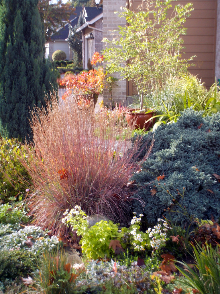 Using a tough plant like the little bluestem in a garden setting