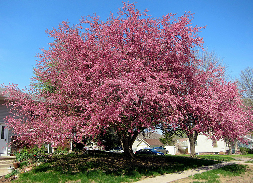 Landscapers Favorite Trees The Good The Bad And The Ugly