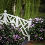 Landscapers favorite Hydrangeas are shrubs for Summer
