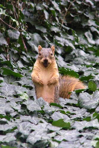 Landscape wish lists may even include squirrels