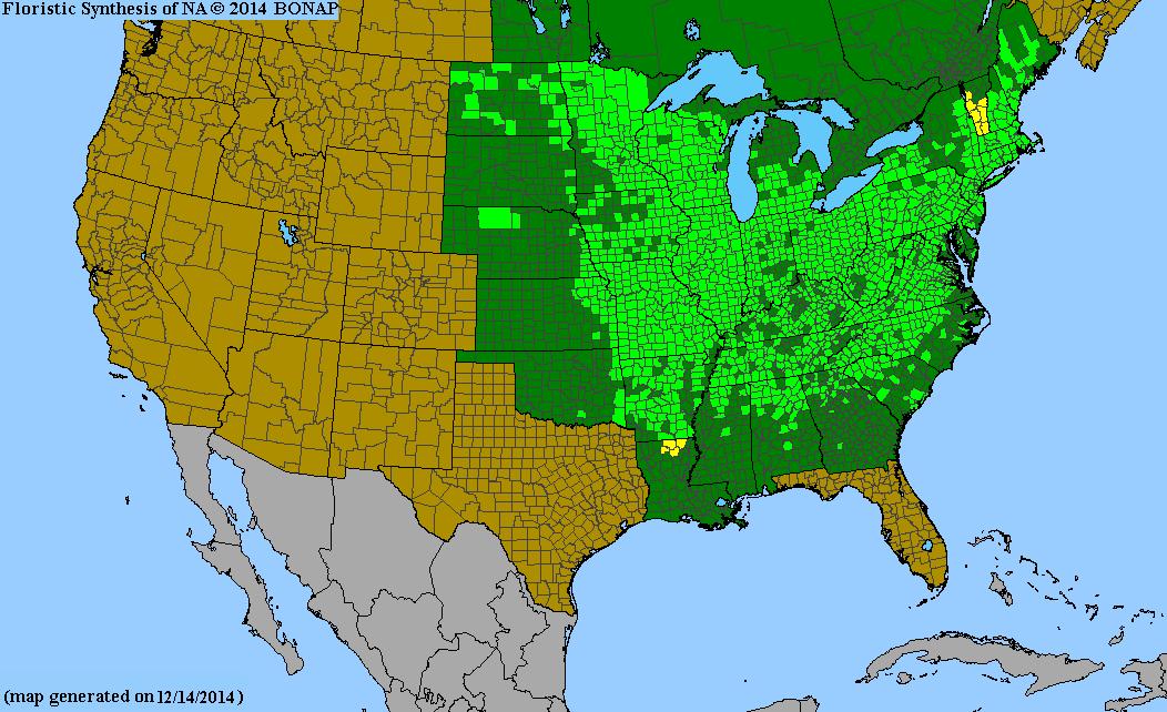 American Filbert native range