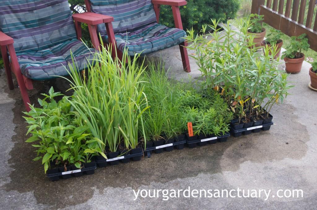Planting plugs into the landscape often use native plants