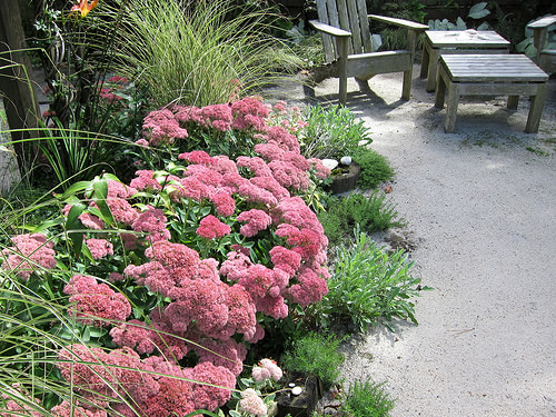 12 Perennials for Attracting Butterflies in the Midwest: autumn fire sedum