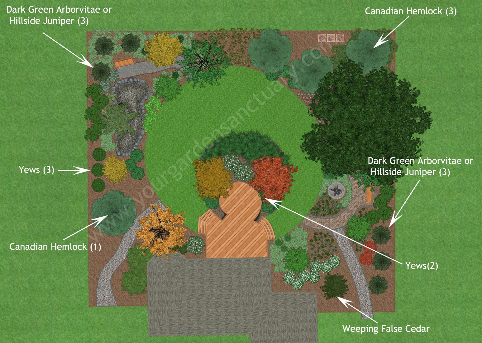 Evergreens for Native Backyard