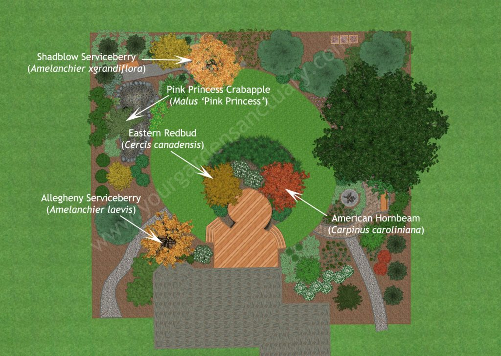 Understory Trees for Native Backyard